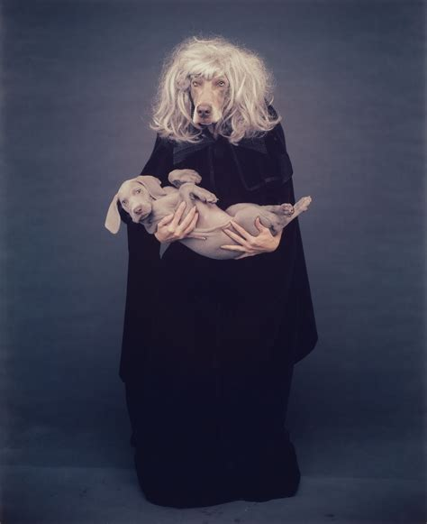 william wegman dogs the year of magical painting shooting the