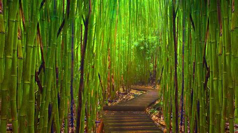 Backyard Privacy Without A Fence Bamboo Hd Wallpaper Picture Image