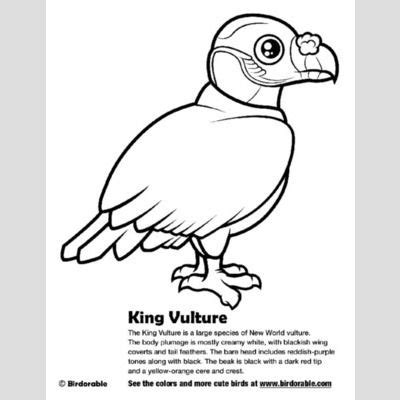 king vulture coloring page king vulture coloring page