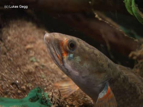 Blus Vinzo meine becken meine fische aquarium forum