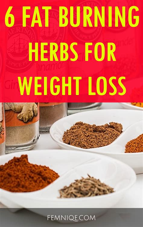 weight loss herbs 6 burning herbs for weight loss femniqe