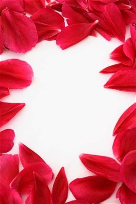 Petals Kelopak Bunga Mawar Palsu renda kelopak mawar merah stock photo merah gratis foto gratis