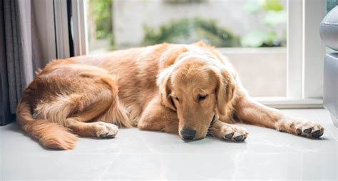 signs of depression in dogs what to do when a is depressed and 5 warning signs