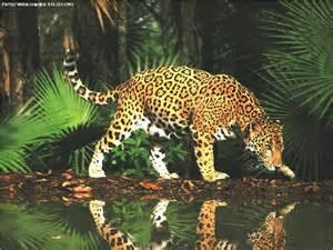 La Jaguars Jaguar