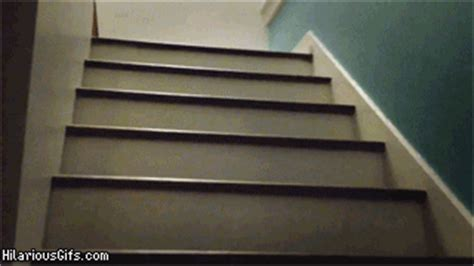pug stairs gif pug stairs gif find on giphy