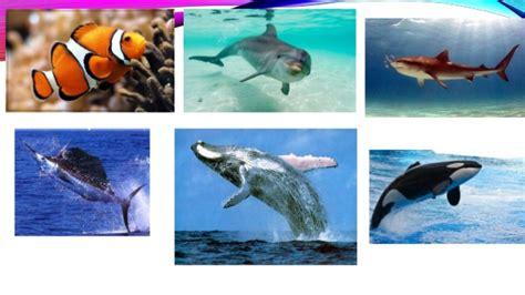 imagenes animales acuaticos y terrestres los animales acuaticos