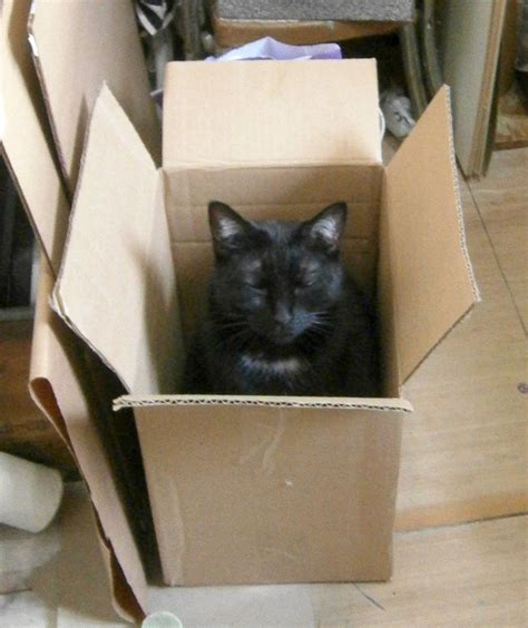 box inspector and other important for cats books daily photo box inspection alternate method the