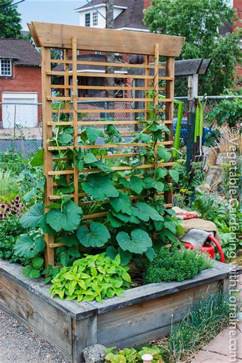Vertical Gardening Trellis Ideas Growing Pumpkins