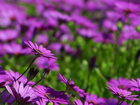 free flower images and stock photos free stock photo in high resolution flowers 10 flowers