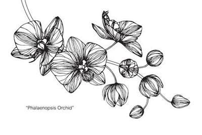 gambar bunga anggrek  indah wallpaper hd foto