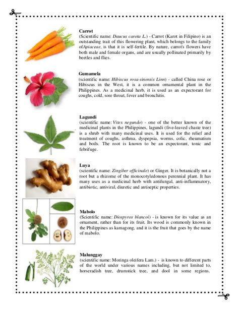 list of flower names with scientific name family and pictures plant