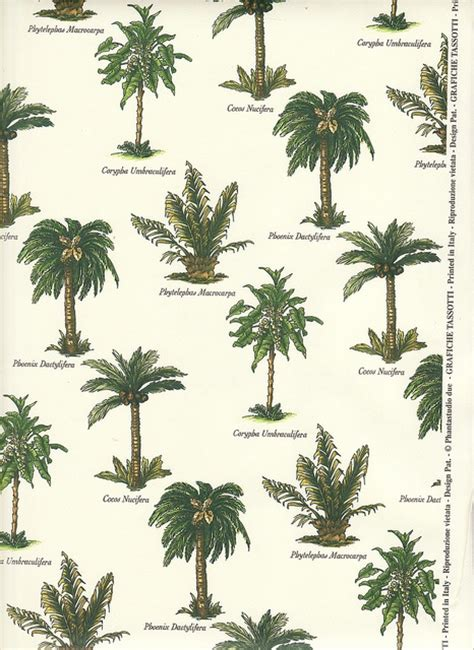 type of tree palm tree varieties palm gardens and plants