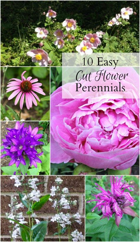 1000 images about how does your garden grow on pinterest window boxes arbors trellis and