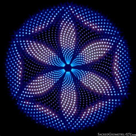 floral pattern gif flower gifville