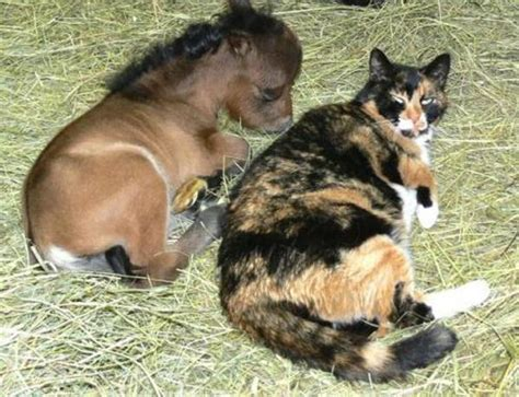 Really Small Is The New Big by The Cutest Mini Horses You Ve Seen Travels And Living