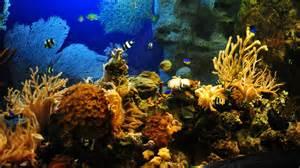 1920 x 1080 jpeg 466kB, Aquarium, background, attractive, wallpaper