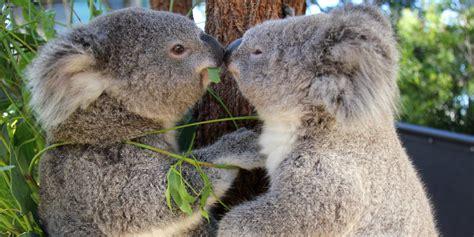 cafe quatsch zeil last minute geschenkideen mode schauen oder koalas retten