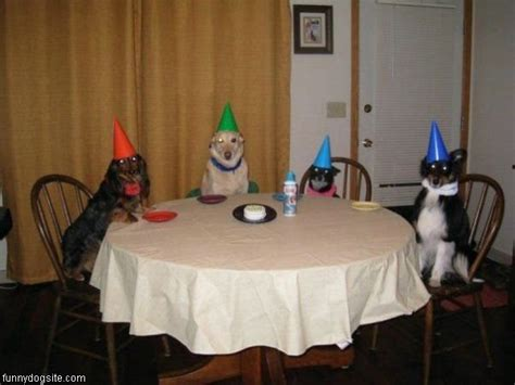 party themes hilarious birthday party funnydogsite com