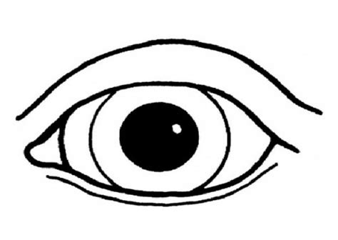 human eye coloring pages