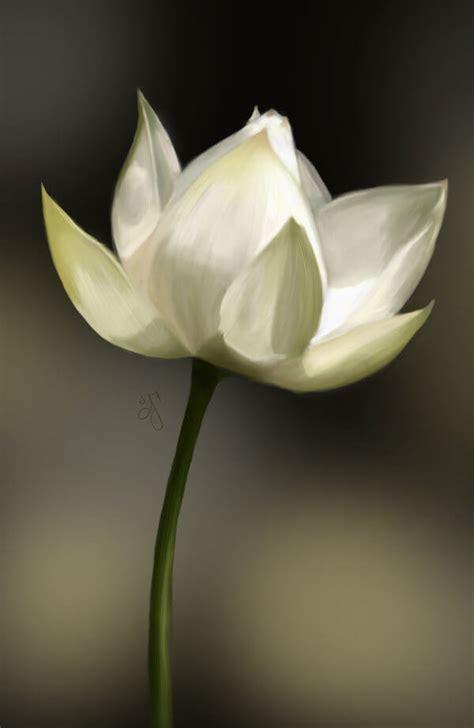 lotus tattoo zwart wit lotus tattoo laten zetten lees de betekenis info en tips