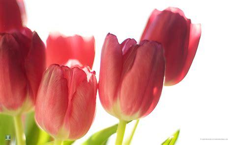spring floral spring flowers free large images