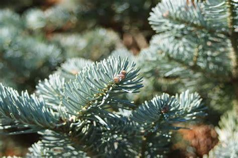 trees  shrubs  guide   trees  shrubs
