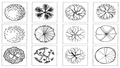 tree symbols landscape design graphic symbols google search
