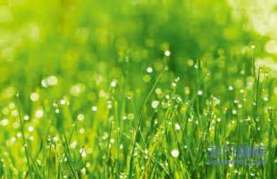 阳光下沾着水滴的绿色草丛电脑屏保图片下载 非凡图库