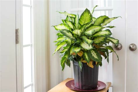 what are some indoor plants that don t need any sun quora 5 indoor plants that don t die easily rl