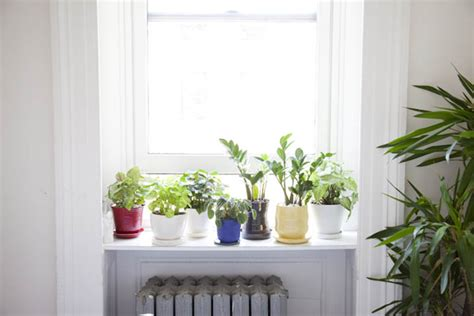 window herb harden windowsill garden herbs images