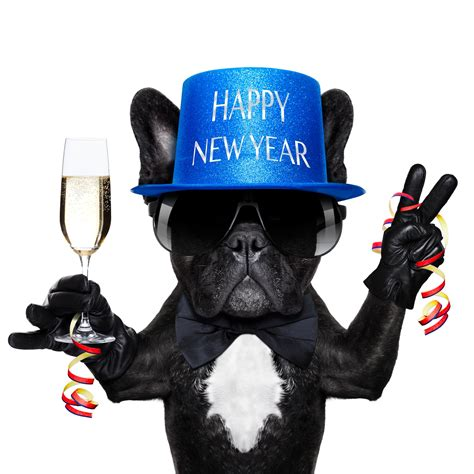 happy new year puppy 10 new year s resolutions for fido sam s