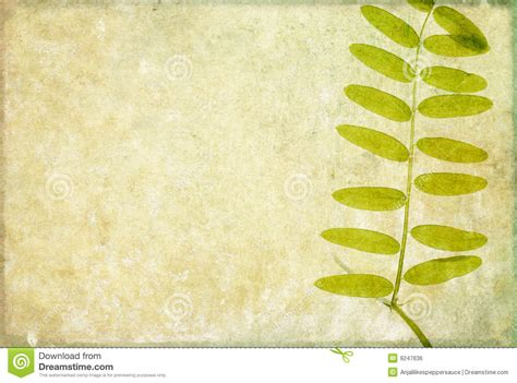 earthy background image royalty  stock image image