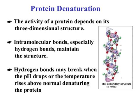 protein denaturation protein folding heat shock proteins and disease involved