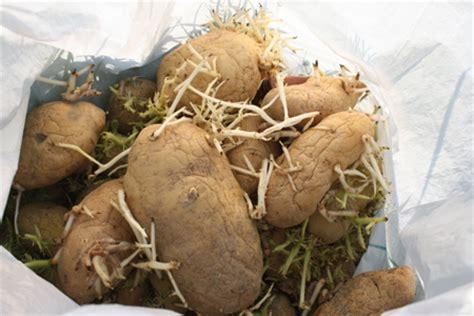 seme spagna spagna nella comunita autonoma di castiglia e il 25