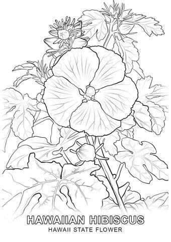 disegni fiori hawaiani hawaii state flower coloring page free printable