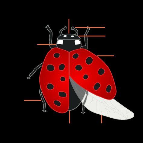 ladybug diagram ladybug diagram images search