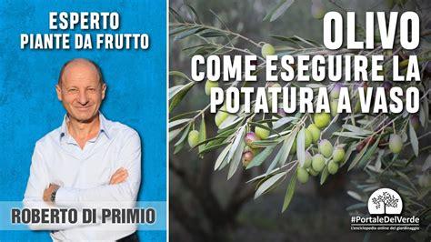 potatura a vaso potatura a vaso dell olivo