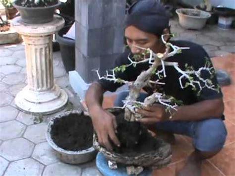 Jual Hidrogel Di Denpasar jual tanaman hias di batam info tanaman lengkap