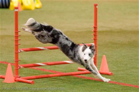 what goes with dogs go go agility club home