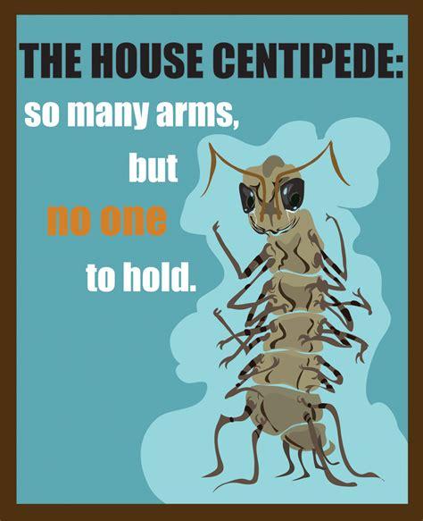 buy house centipedes house centipede by saint juniper on deviantart