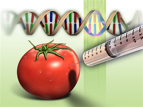 Genetic Modification Dictionary by Food Genetically Modified Genetically Modified Food
