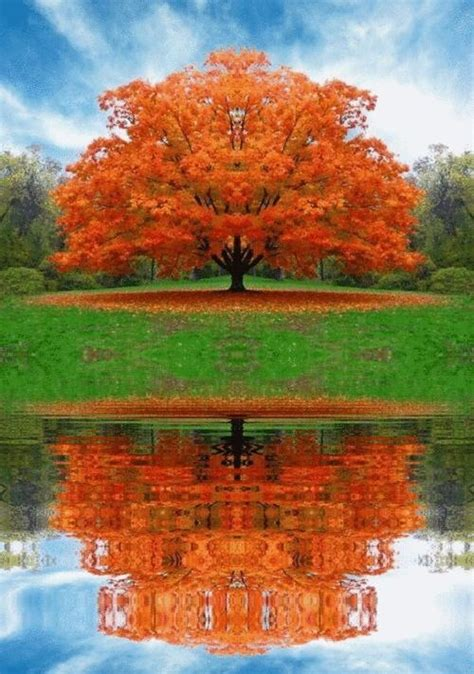 sugar maple in fall autumn pinterest