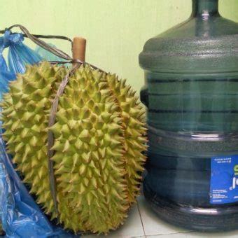 Bibit Durian Bawor Asli jual bibit durian bhineka bawor asli 40 60 cm bibitbunga
