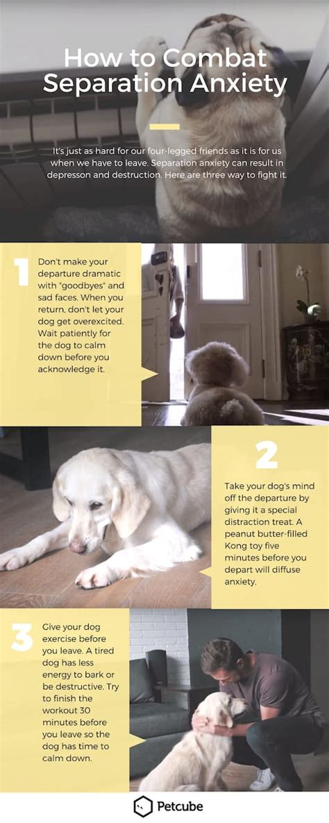 how to crate a with separation anxiety 10 easy steps to treat separation anxiety in dogs