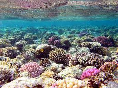 Batu Gambar Koral Otak Brain Coral industri wisata pantai harus berbasis pelestarian sda