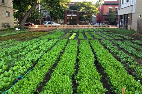 city farming a how to guide to growing crops and raising livestock in spaces books farming start up grows deeper roots in grand rapids