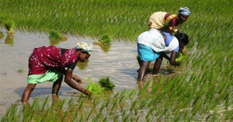 tutorialspoint india rice in bengal go unesco gounesco