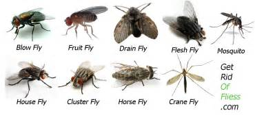 Fruit Fly Infestation In Bathroom by Tiny House Flies Astana Apartments