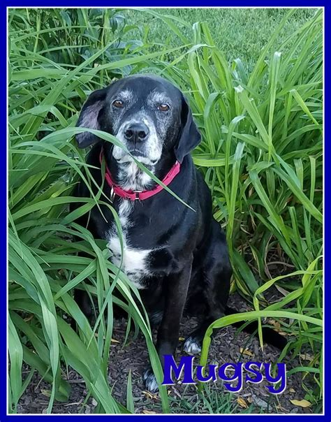 mugsy dogs mugsy safe rescue