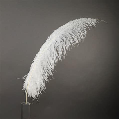 feathers h studio 문신 홍대 cheap white ostrich feathers decore